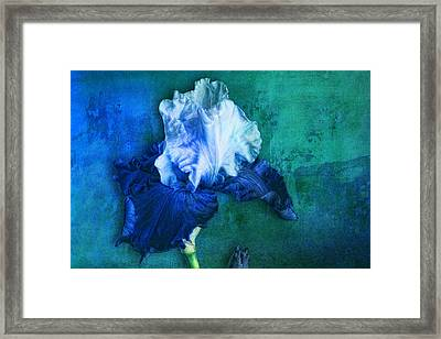 Framed Print featuring the photograph Iris Number Two by Bob Coates