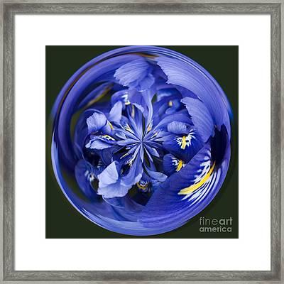 Iris Orb Framed Print by Anne Gilbert
