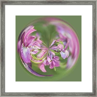 Iris Orb  Framed Print by Kim Hojnacki