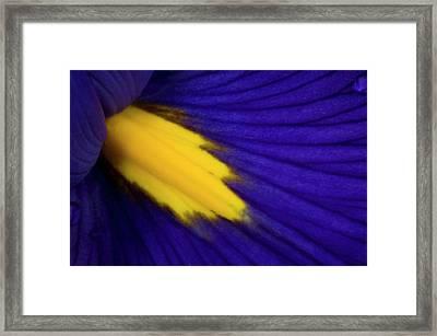 Iris Petal Abstract Framed Print by Nigel Downer