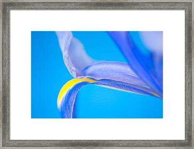 Iris Profile Framed Print by Joan Herwig