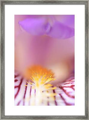 Iris Framed Print by Rebeka Dove