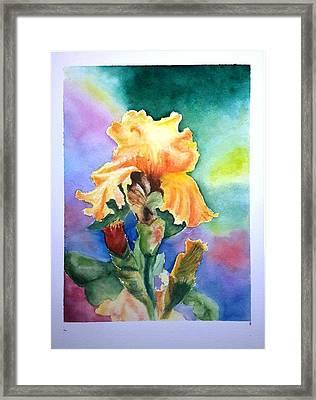 Iris Sold Framed Print