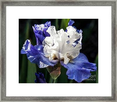 Framed Print featuring the photograph Stairway To Heaven Iris by Roselynne Broussard