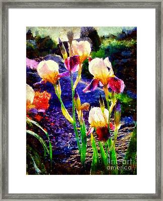 Iris Song Framed Print by Janine Riley