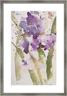Iris Study #3 Framed Print by Robin Miller-Bookhout