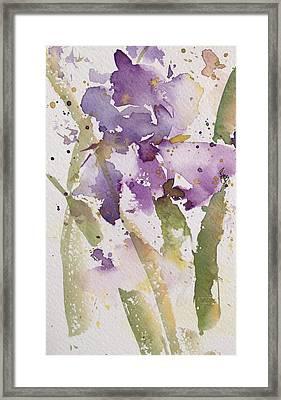 Iris Study #3 Framed Print