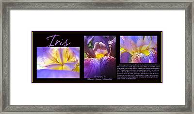 Iris Threesome Framed Print by Brooks Garten Hauschild