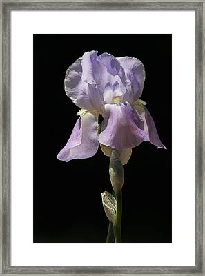 Framed Print featuring the photograph Iris by Trina  Ansel