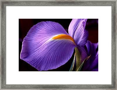 Iris V Framed Print