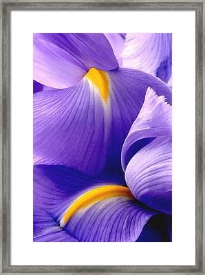Iris Vi Framed Print