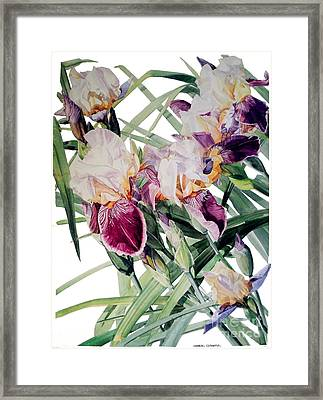 Watercolor Of Tall Bearded Irises I Call Iris Vivaldi Spring Framed Print