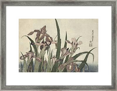 Irises And Grasshopper Framed Print