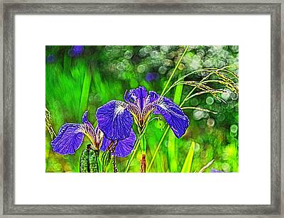 Framed Print featuring the photograph Irises by Cathy Mahnke