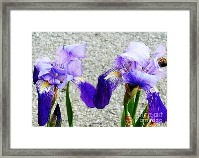 Framed Print featuring the photograph Irises by Jasna Dragun