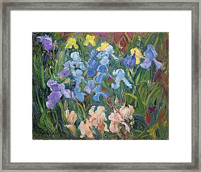 Irises Pink, Blue And Gold Framed Print
