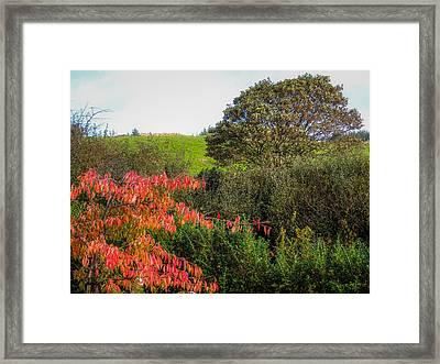 Irish Autumn Countryside Framed Print