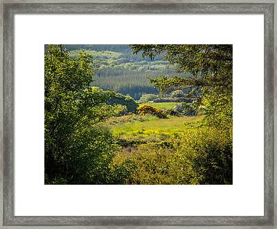 Irish Countryside In Spring Framed Print