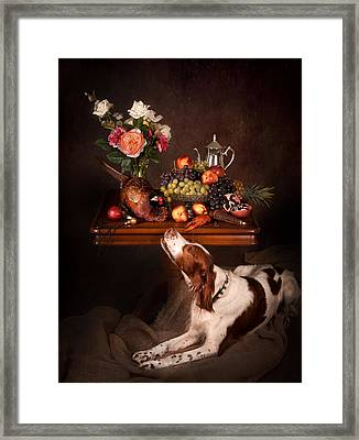 Irish Red And White Setter With Fruits... Framed Print by Tanya Kozlovsky