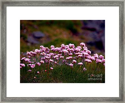 Irish Sea Pinks Framed Print