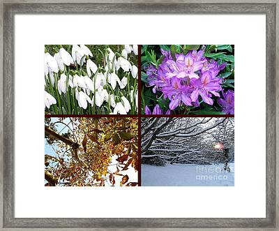 Irish Seasons Framed Print by Patrick J Murphy