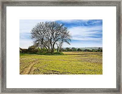 Framed Print featuring the photograph Irish Springtime by Jane McIlroy
