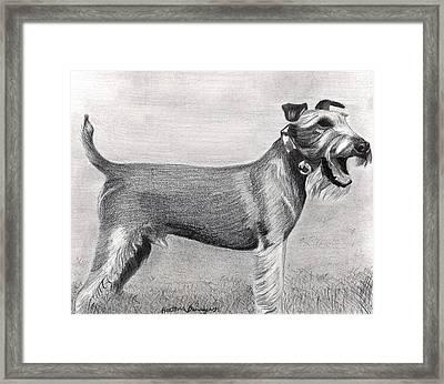 Irish Terrier Dog Portrait Framed Print by Olde Time  Mercantile