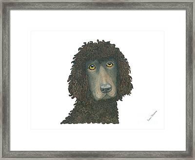 Irish Water Spaniel Framed Print by Yvonne Johnstone
