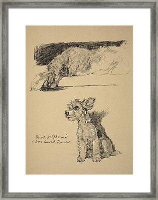 Irish Wolfhound And Wire Haired Terrier Framed Print