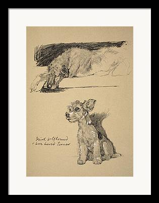 Wire Haired Terrier Framed Prints
