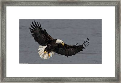 Iron Eagle  Framed Print by Glenn Lawrence
