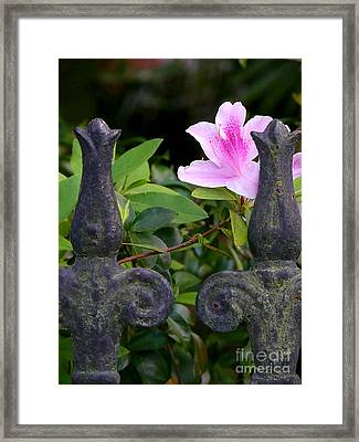 Iron Fence With Azalea Framed Print by Jeanne  Woods