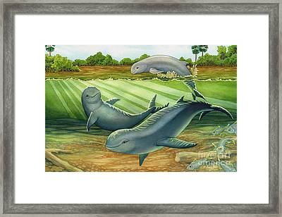 Irrawaddy Or Mekong River Dolphin Framed Print by Tammy Yee