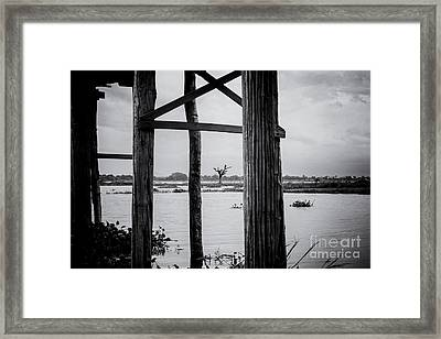 Irrawaddy River Tree Framed Print