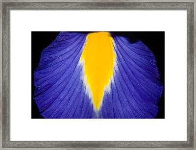 Irresistible Iris Framed Print