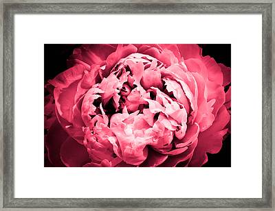 Irresistible Framed Print by Julie Andel