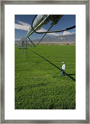 Irrigation Boom And Farmer With Alfalfa Framed Print by Jim West