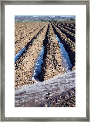 Irrigation Channels In A Field Framed Print