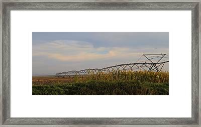 Irrigation On The Farm Framed Print