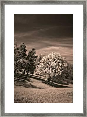 ...is But A Dream Framed Print by Steve Harrington