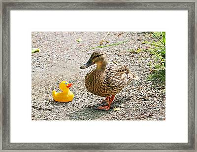 Is Everything Ducky? Framed Print
