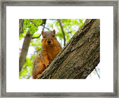 Is It Alright To Have Some Acorns ? Framed Print by Tina M Wenger