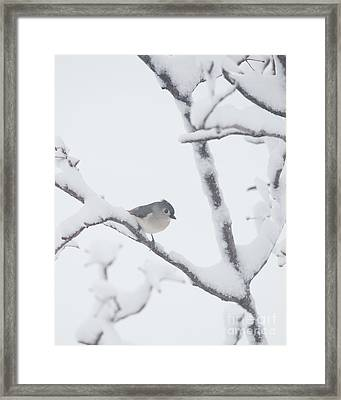 Is It Spring Yet Framed Print by Kay Pickens