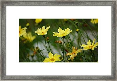 Is Something Bugging You Framed Print