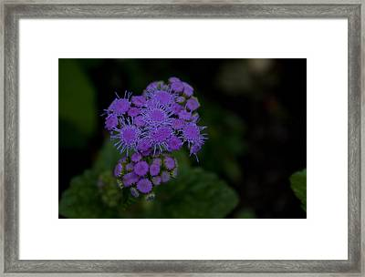 Framed Print featuring the photograph Is That Purple by Greg Graham