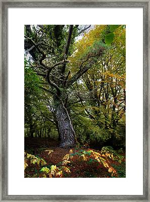 Is That Treebeard? Framed Print by Mark Callanan