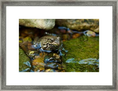 Framed Print featuring the photograph Is There A Prince In There? - Frog On Rocks by Jane Eleanor Nicholas