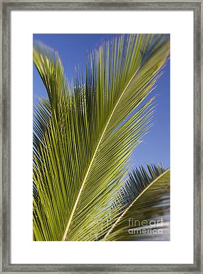 Framed Print featuring the photograph Isabel Beach In Puerto Rico Palm Trees Against Blue Sky by Bryan Mullennix
