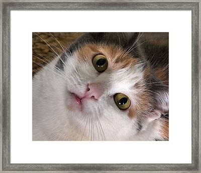 Isabella Framed Print by Camille Lopez