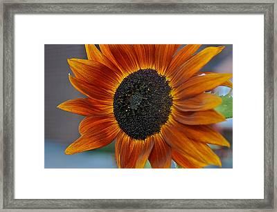 Isabella Sun Framed Print by Joseph Yarbrough